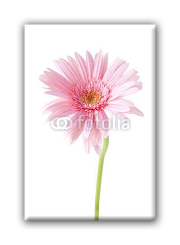 Fleur-0