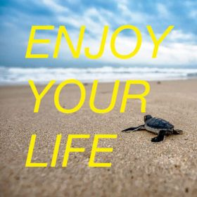 "Un bébé tortue et la mention ""enjoy your life"""
