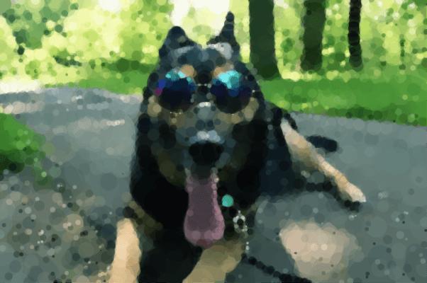 Le chien à lunettes avec un effet peinture que donne Geometrize